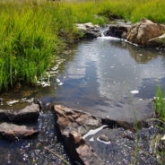 Case Study: River and Wetland Restoration