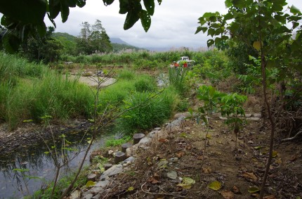 Cassowary Creek, bank stabilization demo project 2015.  Many of the rainforest tree plantings are well established and there is virtually no active erosion.