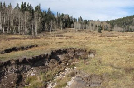 Large meadow draining headcuts on Placer Creek, Carson National Forest, NM. 2013.